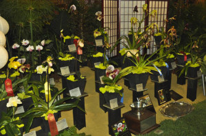 2015-Monsoon-Flora-display-photo-courtesy-Heidi-Kirkpatrick