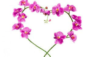 Heart orchids wallpaper